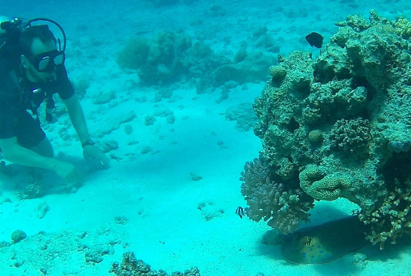 Punaisenmeren koralleille pääsee sukeltamaan hyvinkin edullisesti, varsinkin jos hallitsee tinkimisen jalon taidon