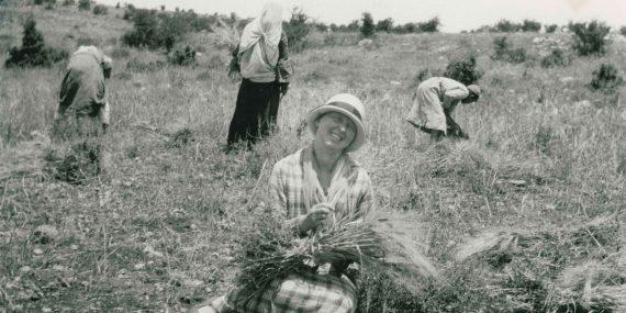 Mustavalkoinen valokuva, jossa hattupäinen naurava nainen istuu pellon laidalla lyhde sylissään. Taustalla kolme henkilöä keräävät viljaa pellolta.