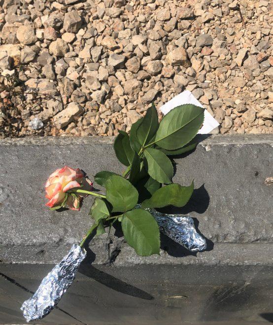 Kuvassa kaksi ruusua päällekkäin, jotka on aseteltu aidalle.